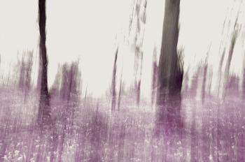 landscape16